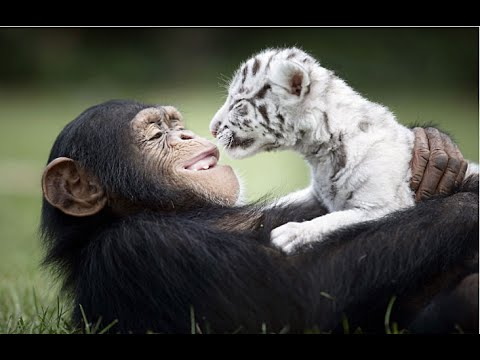 animaux amis.jpg