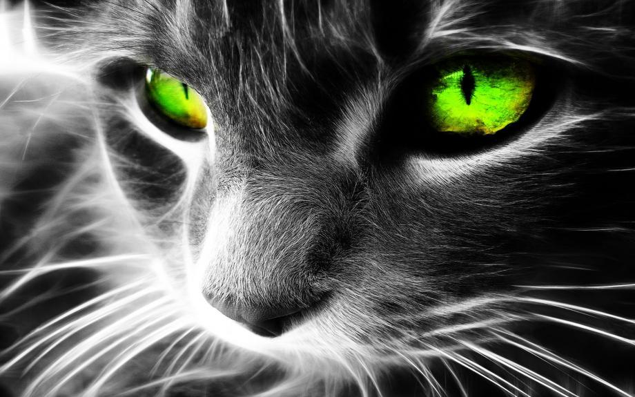 chat vert.jpg