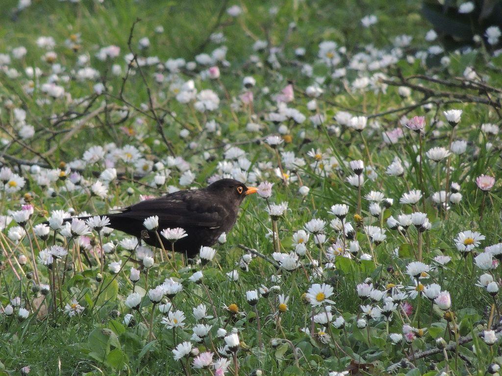 a8s2 oiseaux.jpg