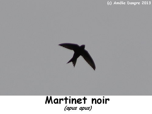 martinetnoir.png
