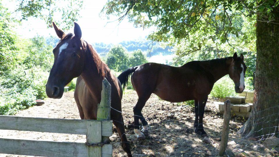 mon-blog-de-cheval