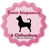 template-macaron-blog-chihuahua-3.png
