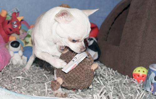 doggy-4117.jpg