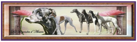 Greyhound20.jpg