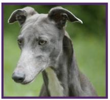 Greyhound5.jpg
