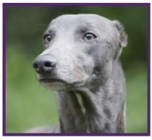 Greyhound6.jpg
