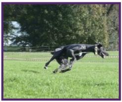Greyhound8.jpg