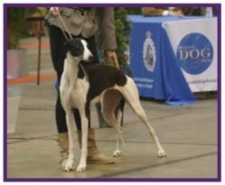 Greyhound10.jpg