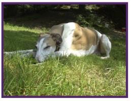 Greyhound13.jpg
