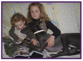 Greyhound14.jpg