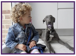 Greyhound15.jpg
