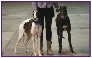 Greyhound17.jpg