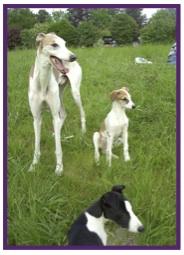 Greyhound19.jpg