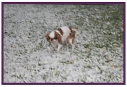 Daphné neige1.jpg