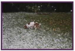 Daphné neige2.jpg