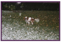 Daphné neige3.jpg