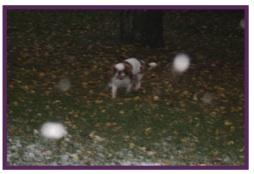 Daphné neige4.jpg
