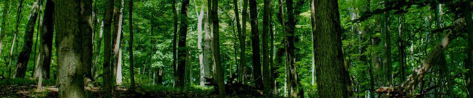Le bois maudit