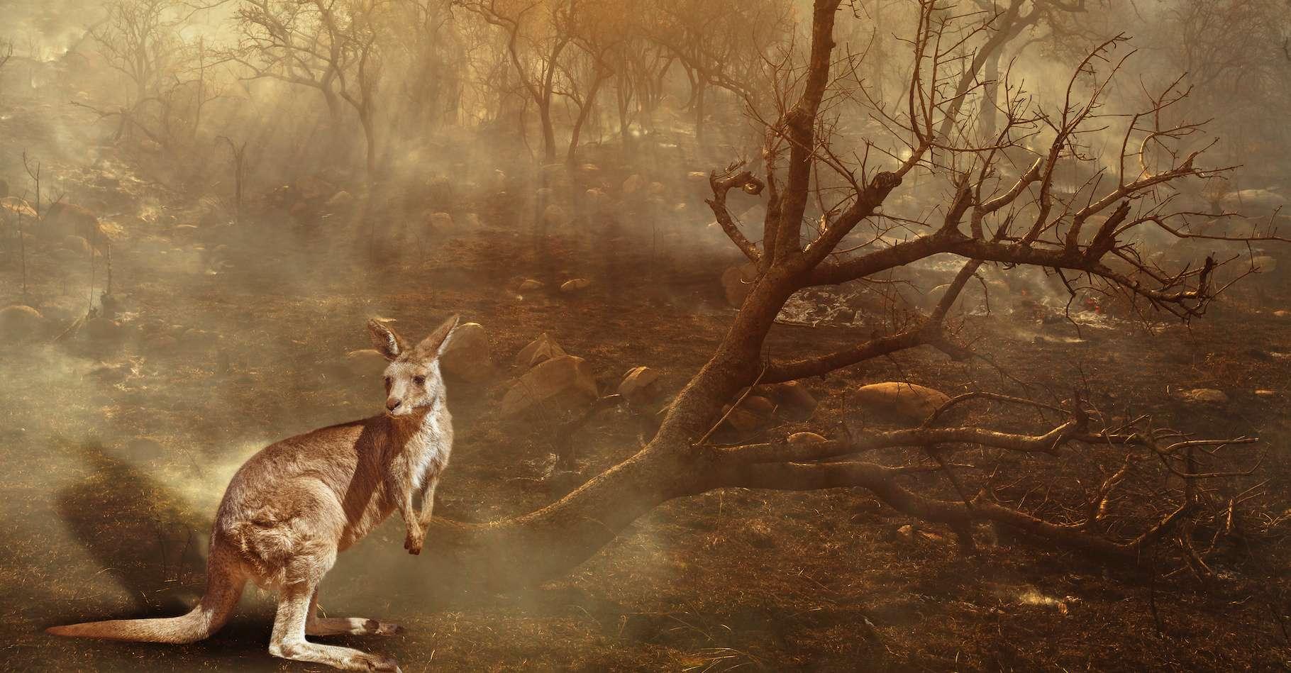 66a51b7451_50159041_animaux-feux-australie.jpg