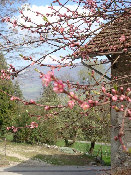 Mieugy printemps 2012 2.JPG
