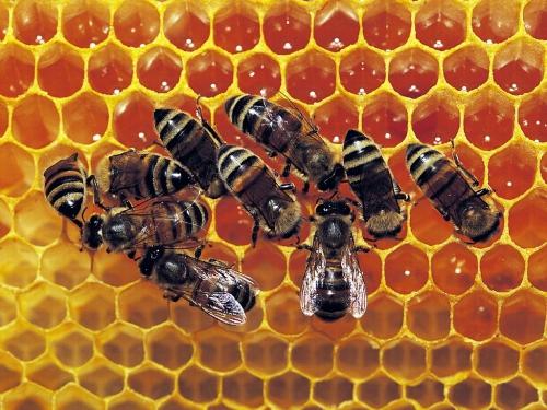 beautiful-honeycomb_1024x768_3579.jpg