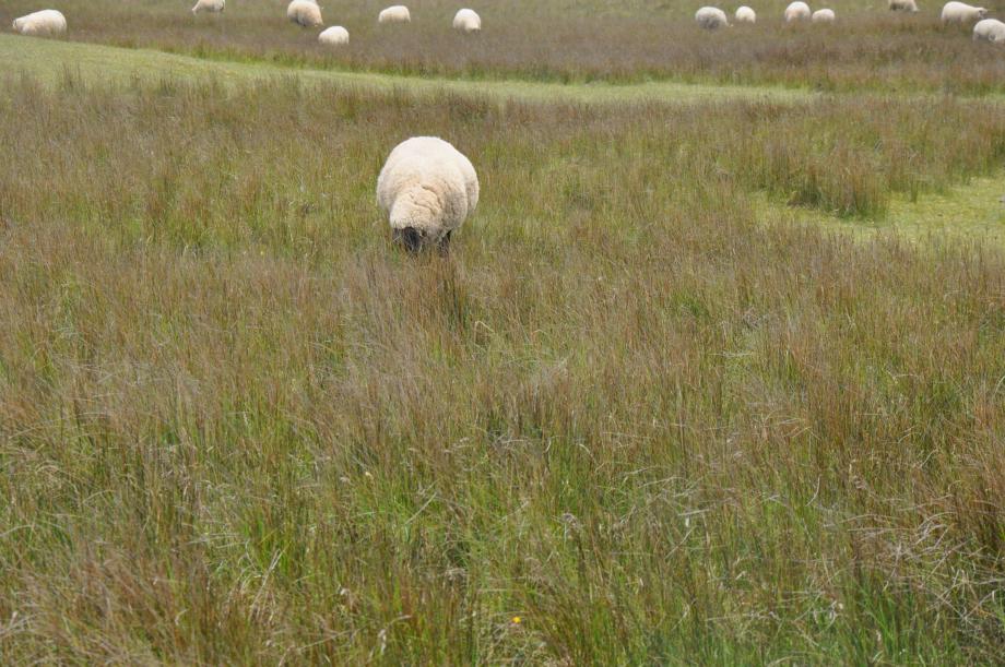 1- La parabole de la brebis perdue, nous parle du pécheur qui trouve, saisit main de Dieu, accepte son salut et se joint au troupeau du bon berger.