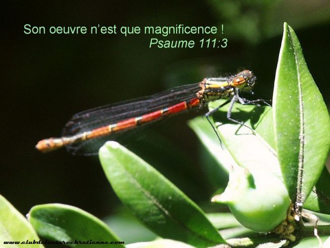 Psaumes 111.3