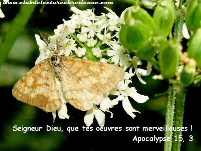 Apocalypse 15.3