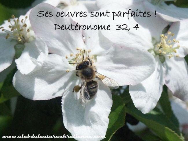 Deutéronome 32.4