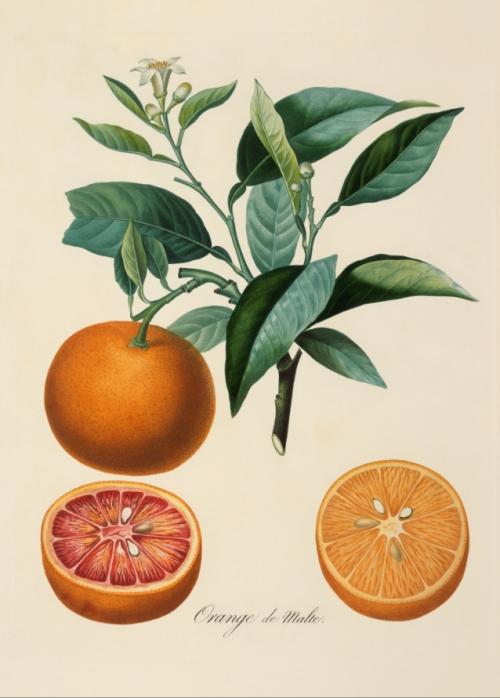 Orange de malte.jpg