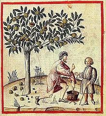 Chataigne récolte XIV siècle.jpg