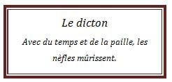 dicton49.jpg
