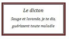 dicton66.jpg