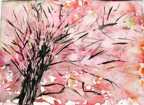 cerisier-du-japon-005.1238512834.JPG