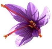 fleur de cumin.jpg