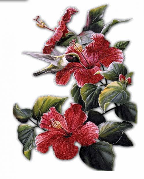 Hybiscus.jpg