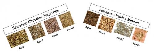 Les semences.jpg
