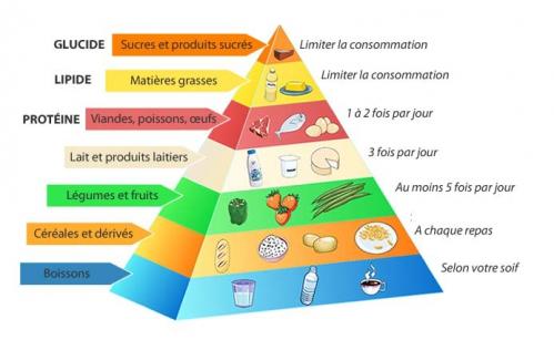 La pyramide alimentaire.jpg