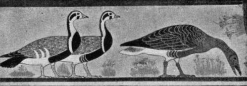Oies de Meidoun - Musée du Caire.jpg