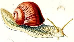 escargot1.jpg