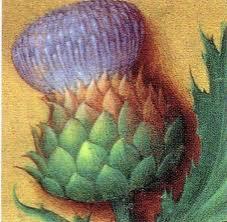 fleur artichaut.jpg