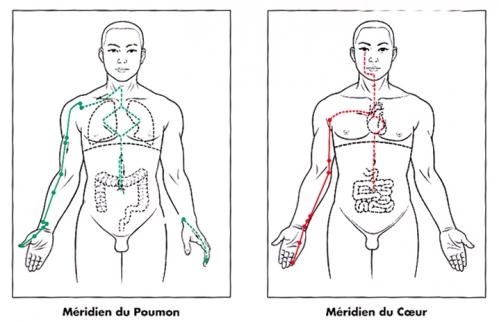 Meridien poumon coeur1.jpg