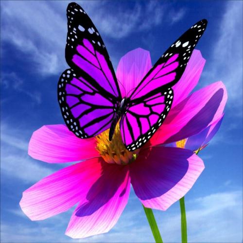 stickers-geant-deco-papillon-fleur.jpg