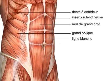 anatomie-muscle-abdominaux.jpg