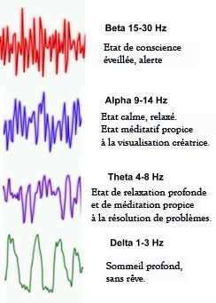 ondes cerebrales français.jpg