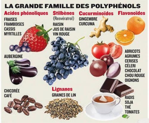 tableau-polyphenols.jpg
