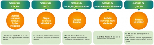 carences-oligo-element-trouble-fertilite-femelle.jpg