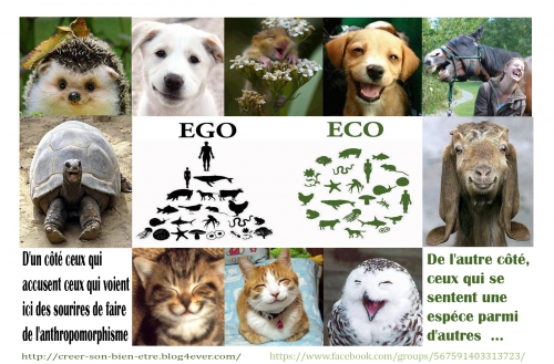 EGO ECO.jpg