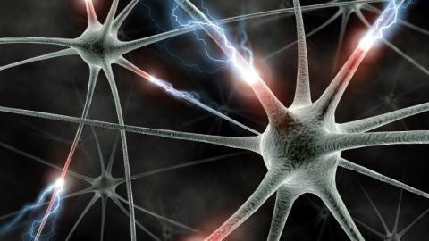 electri synapases.jpg