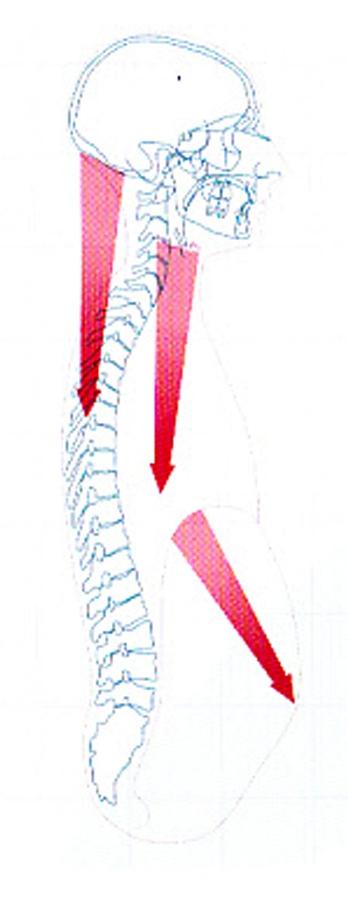 pharinx apne 5 bis-2.jpg